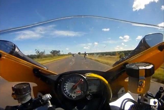 snake motorcycle suzuki gsxr video